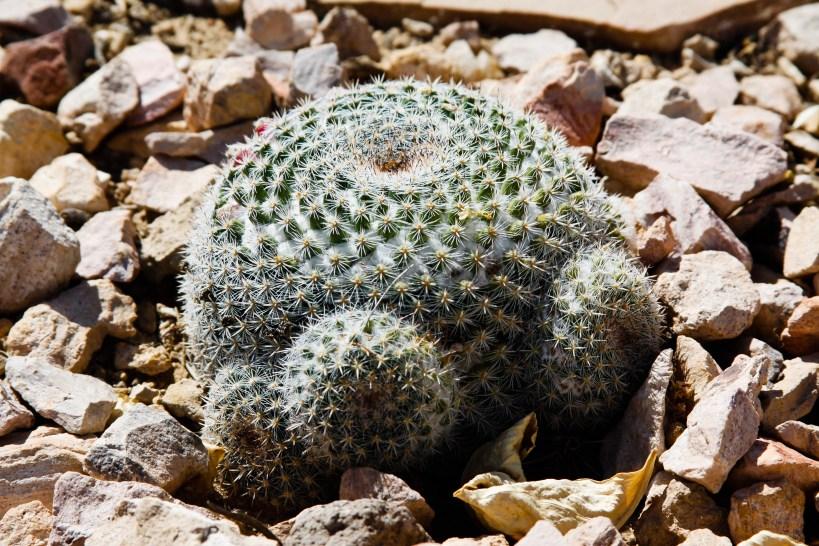 Small cactus 3