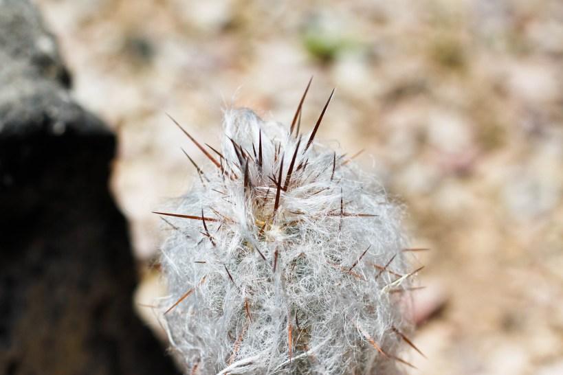 Sonoran Desert Arizona