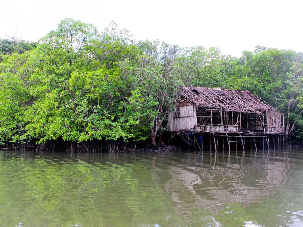 Indonesia: Mangroves