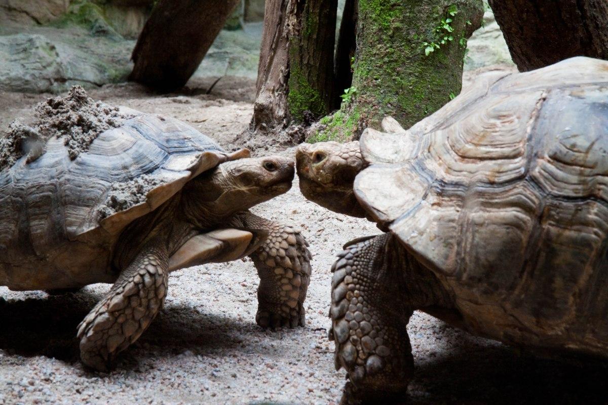 Singapore: The Singapore Zoo