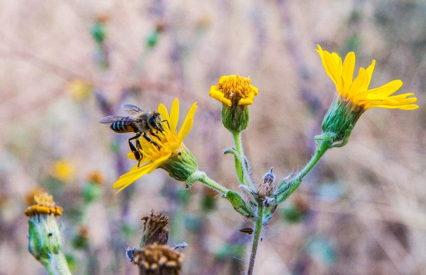 Bee edited