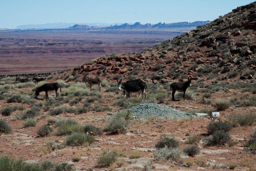 Navajo Indian Reservation-10