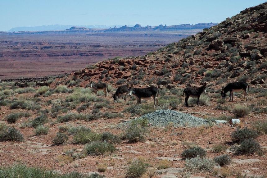 Navajo Indian Reservation-6