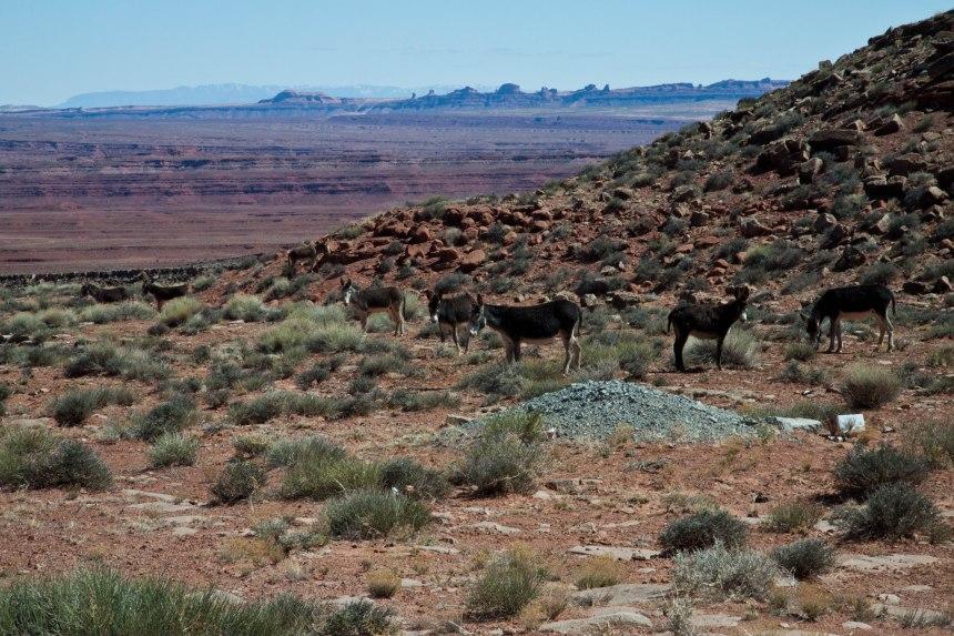 Navajo Indian Reservation-7