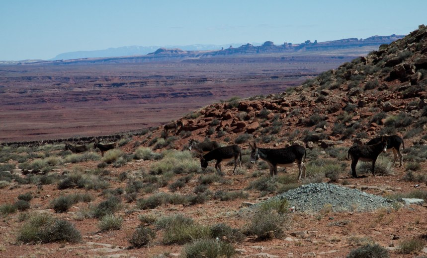 Navajo Indian Reservation-8