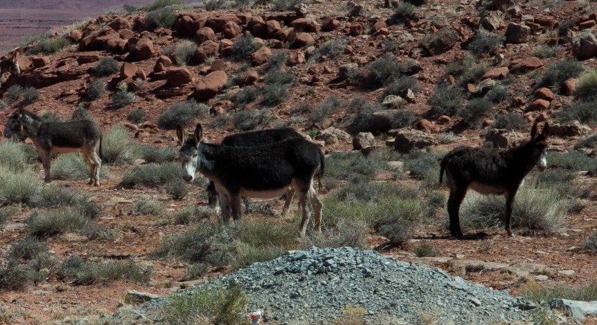 Navajo Indian Reservation-9