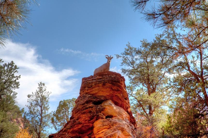 eye contact mountain goat_-2_-3_-4_tonemapped