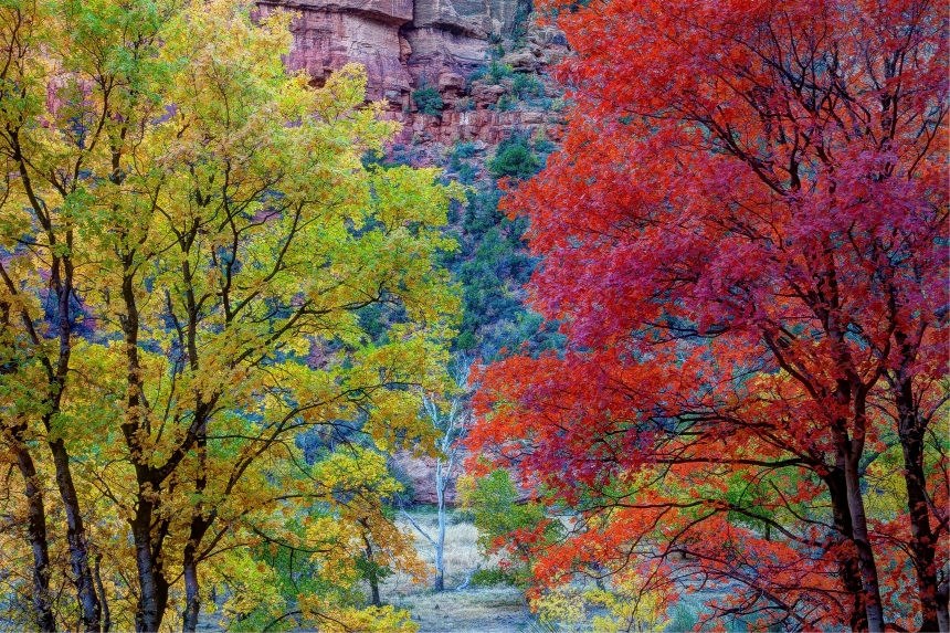 fall trees_-2_-3_-4_fused
