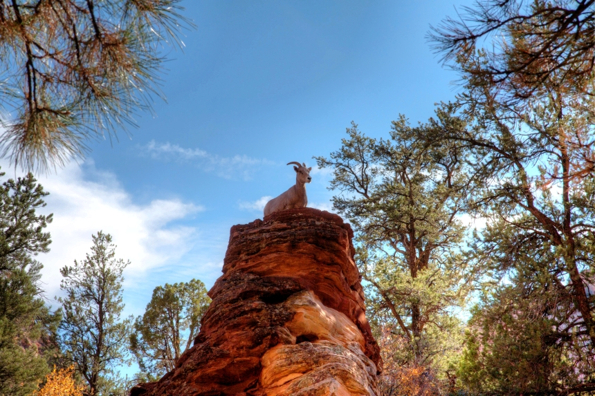 mountain goat_-2_-3_-4_tonemapped