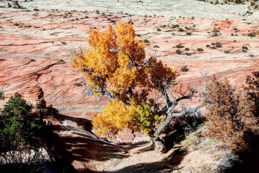 yello tree